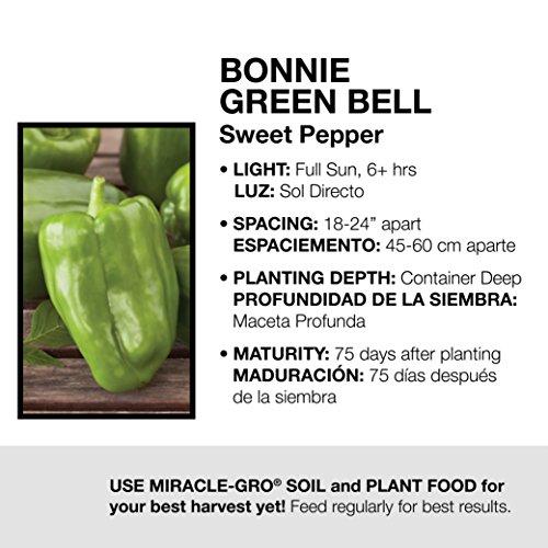 Bonnie Plants Bonnie's Green Bell Pepper Live Vegetable Plants - 4 Pack | Non-GMO | 2 - 3 Ft Plants | 4.5 x 4 Inch Pepper Size by Bonnie Plants (Image #3)