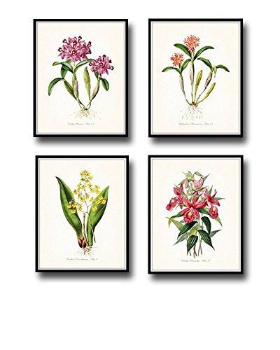 Botanical Print Set of 4 Tropical Orchid Giclee Fine Art Prints - Unframed ()