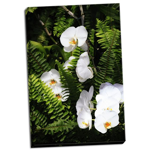 Orchids & Ferns I, Fine Art Photograph By: Alan Hausenflock; One 24x36in Hand-Stretched Canvas by Gango Home Décor