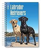 Labrador Retrievers 2018 6 x 7.75 Inch Weekly Engagement Calendar, Animals Dog Breeds Retriever