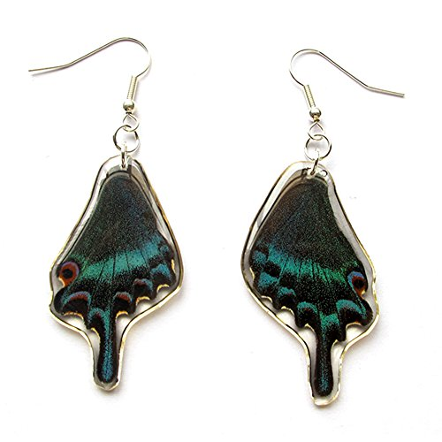 Genuine Butterfly Alpine Black Swallowtail Wing Earrings Set