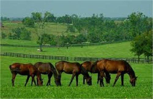 1 Acre Horse Pony Paddock Mix Repair Paddock OVERSEED Pastures Grass Seed 1 Acre Pretty Wild Seeds