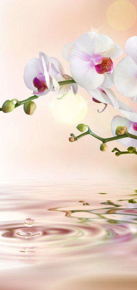 T/ür Fototapete T/ürtapete 100x211 cm T/ürfolie selbstklebend o Vlies PREMIUM PLUS 200 Material:100x211cm Vlies T/ür T/ürposter T/ürpanel Foto Tapete Bild no Blumen Orchidee Natur