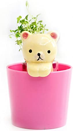 Ez Life Diy Grow Your Own Grass Table Plants - Yellow Cat With Cup