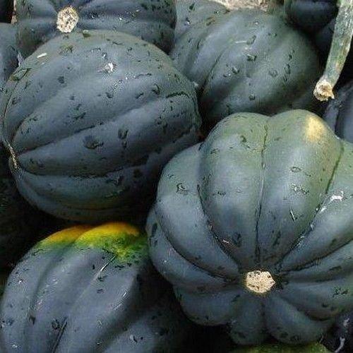 Squash Bush Acorn Vegetable Seeds (Cucurbita maxima) (Bush Acorn Squash)