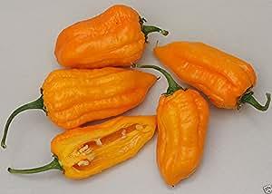 10 bonda man jacques pepper Seeds (Capsicum chinense) From Martinique,Very Rare