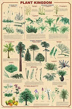 Plant Kingdom Poster