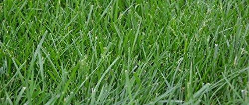 Kentucky K31 Tall Fescue Grass Seed by Eretz - Willamette Valley, Oregon Grown (50lbs) by Eretz (Image #4)