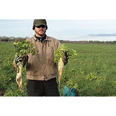Forage Radish (10 LBS) : Garden & Outdoor