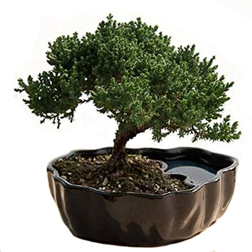 Best artificial bonsai list