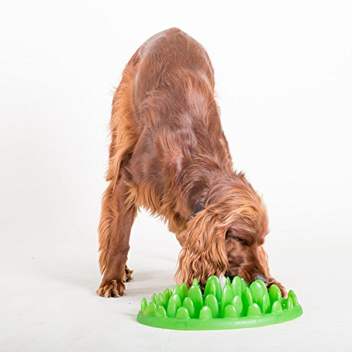 The Company of Animals - Northmate Interactive Feeder - Slow Feed Dog Bowl - Green - Standard
