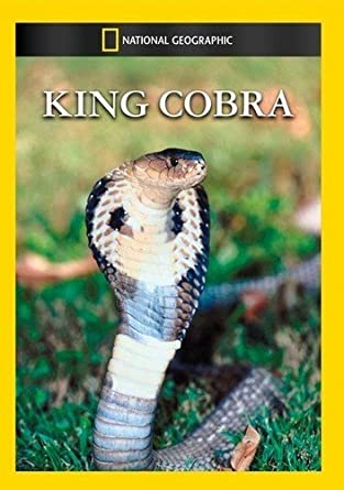 Amazoncom King Cobra The King Cobra Movies Tv
