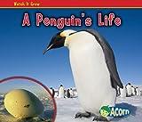 A Penguin's Life, Nancy Dickmann, 1432942336