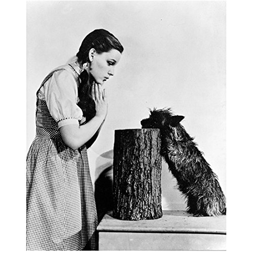 (The Wizard of Oz Judy Garland as Dorothy with Toto 8 x 10 Inch Photo )