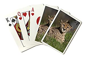 Cheetah poker