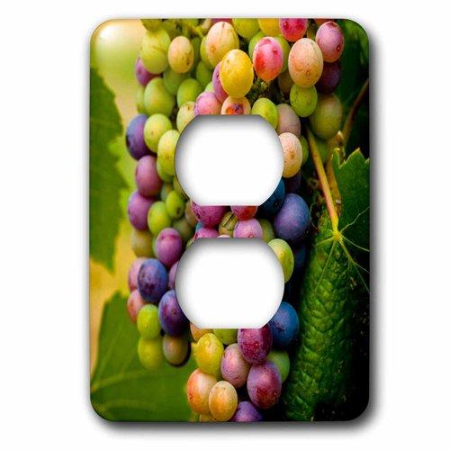 Pinot Grape - 3dRose lsp_209295_6 USA, Washington, Okanogan Valley Pinot grapes ripen in vineyard 2 Plug Outlet Cover