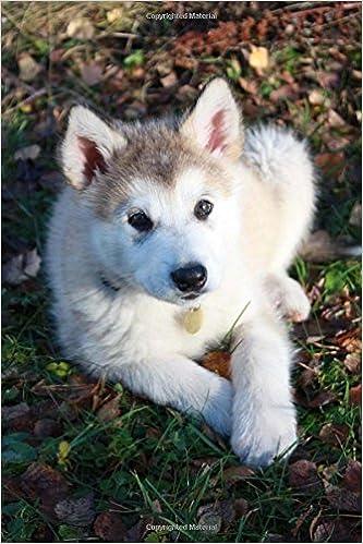 Buy Cute Baby Alaskan Malamute Puppy Dog Journal Book Online At Low