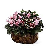 Pretty Pinks Planter Basket