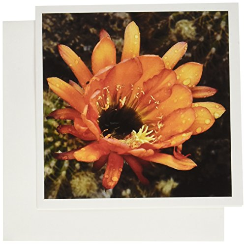 3dRose Decorative colorful garden botanic classic plant SW Southwest Desert cactus rain flower - Greeting Cards, 6 x 6 inches, set of 12 ()