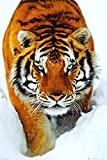 Poster Service Tiger Snow Poster, 24-Inch by 36-Inch