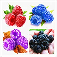 500 Pcs/Bag Raspberry Bonsai Organic Heirloom Fruit Bonsai Tree Bonsai Sweet and Fresh Plant for Home
