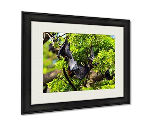 Ashley Framed Prints, Flying Fox, Black, 16x20 Art