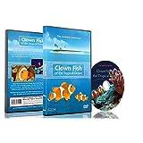 Tropical Fish DVD - Clown Fish of the Tropical Ocean