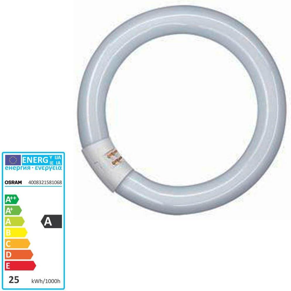 Osram L/ámpara fluorescente L G10q 840 C coolwhite circular 26mm tubo 22W EEK B