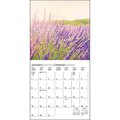 Provence 2017 Small Wall Calendar Photo #2