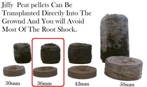 500 Jiffy 7 Peat Pellets 36mm - Seeds Starting - Jiffy Peat Pellet Helps to Avoid Root Shock - 500 Jiffy Peat Pellets 36mm by Jiffy (Image #1)