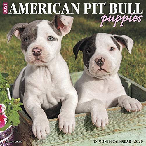 Just American Pit Bull Terrier Puppies 2020 Wall Calendar (Dog Breed Calendar)