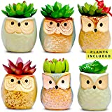 green living room ideas  Set of 6 Artificial Succulent Plants and Ceramic Planters, Fake Succulents Office Plant Pots, Indoor Decorations, New Home Gift Ideas, Living Room Table Shelf House Desk Decor