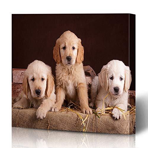 Ahawoso Canvas Prints Wall Art 12x16 Inches Face Farm Golden Retriever Puppies Autumn Grass Granary Barn Puppy Harvest Hay Adorable Decor for Living Room Office Bedroom