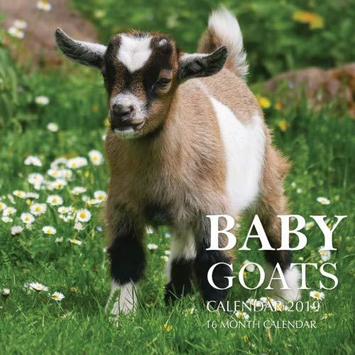 Baby Goats Calendar 2019: 16 Month Calendar