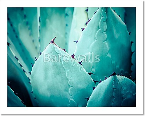 Sharp Pointed Agave Plant Leaves Bunched Together. Paper Print Wall Art (8 in. x 10 in.) Barewalls Leaf