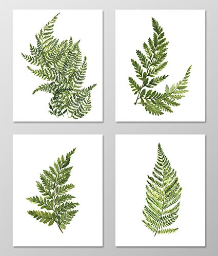 Fern art #A074 - Set of 4 art prints (8x10). Fern wall art.Fern picture.Botanical art.Botanical prints wall art. Nature art botanical.Painting.Nature art.Nature wall art.Green wall art.Green decor. by AntonyPrint