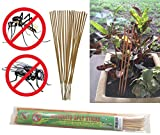 All-natural Mosquito and Fly Repellent Incense Sticks - Citronella, Rosemary, Thyme, Brazilian Andiroba Oil - 30 Count Scented Sticks (Yellow)
