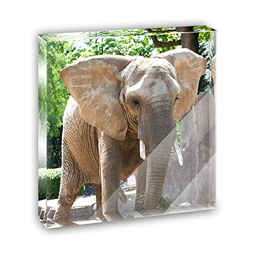 Elephant in the Room Acrylic Office Mini Desk Plaque Ornament (Elephant Paperweight)