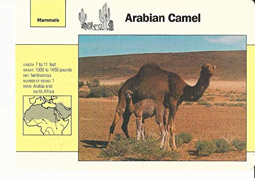 1992 Grolier, Wildlife Adventure Cards, Animals, 2.5 Arabian Camel