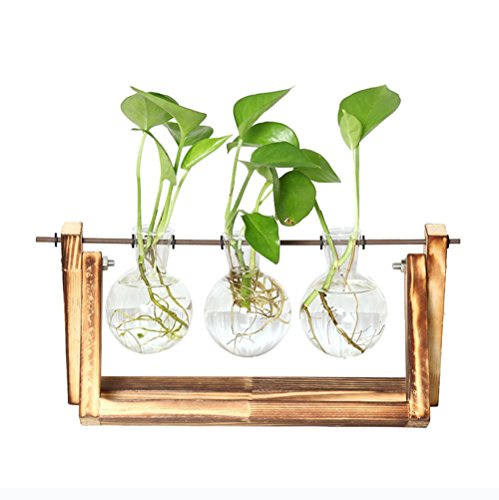 Gmakerr Vase with Wooden Stand Plant Pot Terrarium Container (3 Terrarium) (Floral Plant Stand)