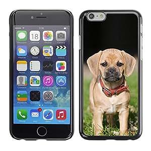 Vortex Accessory Carcasa Protectora Para APPLE iPHONE 6 - Beagle Pug Puggle Puppy Dog Breed -