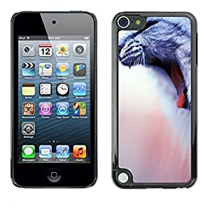 Paccase / SLIM PC / Aliminium Casa Carcasa Funda Case Cover - American Wirehair Cat House Yawn - Apple iPod Touch 5