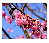 MSD Natural Rubber Mousepad beautiful Wild Himalayan Cherry flower Prunus cerasoides at Thai flower garden IMAGE 35478677 Stain Resistance Kit Kitchen Table Top Desk Collect