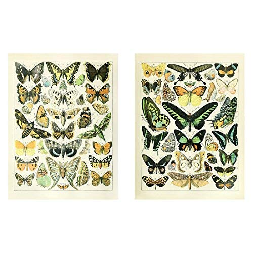 Meishe Art Vintage Poster Print Butterflies of the World Breeds Collection Identification Reference Old Scientific Chart Colorful Butterfly Home Wall Decor -
