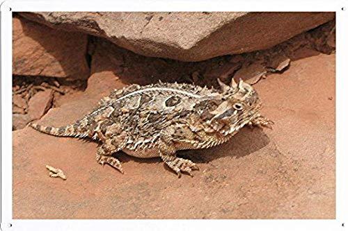(KPSheng Tin Poster (20x30cm) of Texas Horned Lizard 26307 Animal Sign)