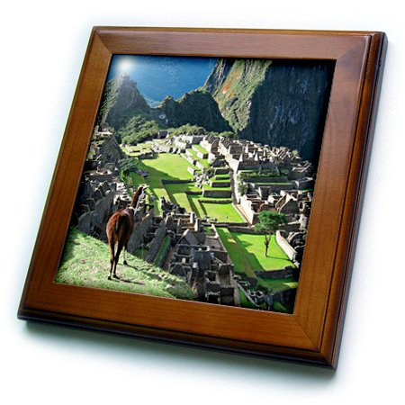 (3dRose ft_141644_1 Peru, Machu Picchu, Llama Overlooks The Lost City Sa17 Mgl0057 Miva Stock Framed Tile, 8 by 8-Inch )