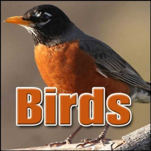 Bird, Chickadee - Mountain Chickadee: Chirping, Animal Birds, Greatest Sound Effects