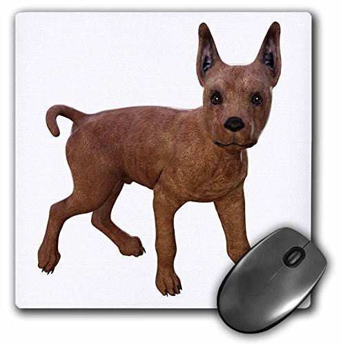 (3dRose Boehm Graphics Animal - Miniature Pinscher Puppy Turning - Mousepad (mp_220917_1))