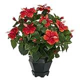 Nearly Natural 6691 Hibiscus with Black Hexagon Vase Decorative Silk Plant, Orange
