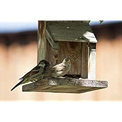 LAMINATED 36x24 inches POSTER: Birds Feeder Animal Wildlife Feed Food Natural Garden Outdoor Feeding House